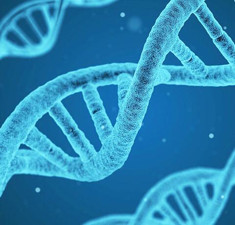 Nos gènes portent la trace de nos traumatismes